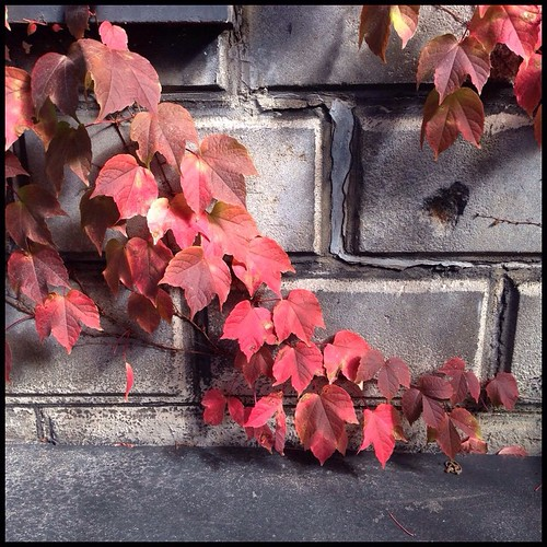 Photo Friday: Signs of Autumn