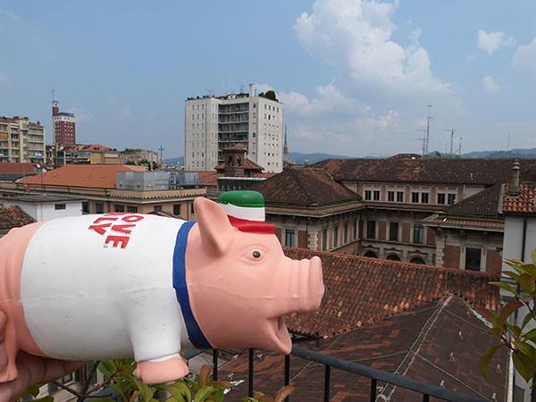 cochon sur les toits