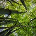 Bamboo forest... by Syahrel Azha Hashim