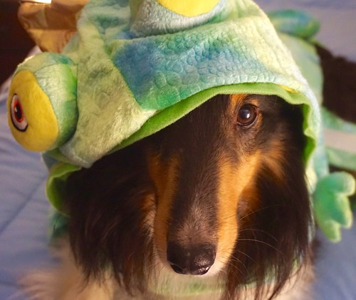 The dog behind the frog