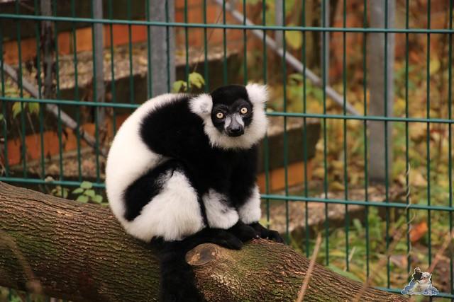 Tierpark Berlin 07.11.2015  0215