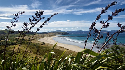 sea newzealand summer plant beach rock swimming landscape dune bluesky pacificocean northisland omaha rodney flax sandybeach newzealandflax haurakigulf tawharanui phormiumtenax flowerstalk tipoint aucklandarea tawharanuiregionalpark omahabay tamahunga tawharanuipeninsula cometsrocks tawaranuiopensanctuary