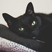Black Cat Appreciation - Day 229/365 by MikeBrowne