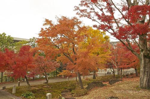 【写真】2014 紅葉 : 智積院/2020-09-07/IMGP7564