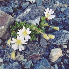 You don't get many flowers at 2,600m, but the tiny ones that manage to grow are lovely.