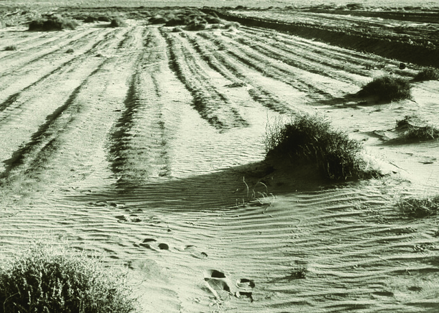 Wind-devastated farmland in Kansas during the Dust Bowl.