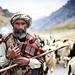 Kashmiri nomad driving sheep and goats - Drass - Jammu & Kashmir by Rajkumar Photos