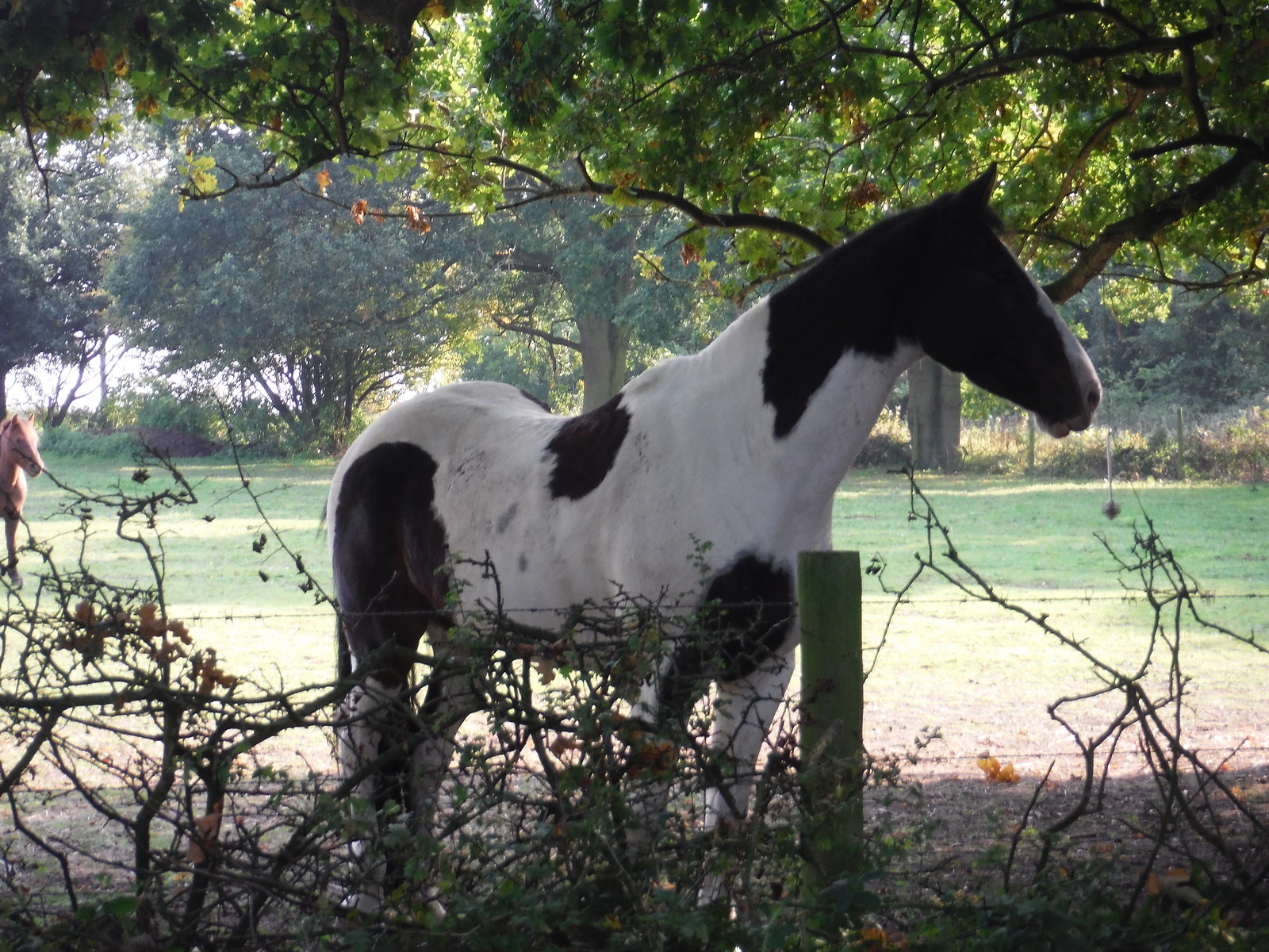 Horse on Quilter's Farm SWC Walk 159 South Woodham Ferrers to North Fambridge