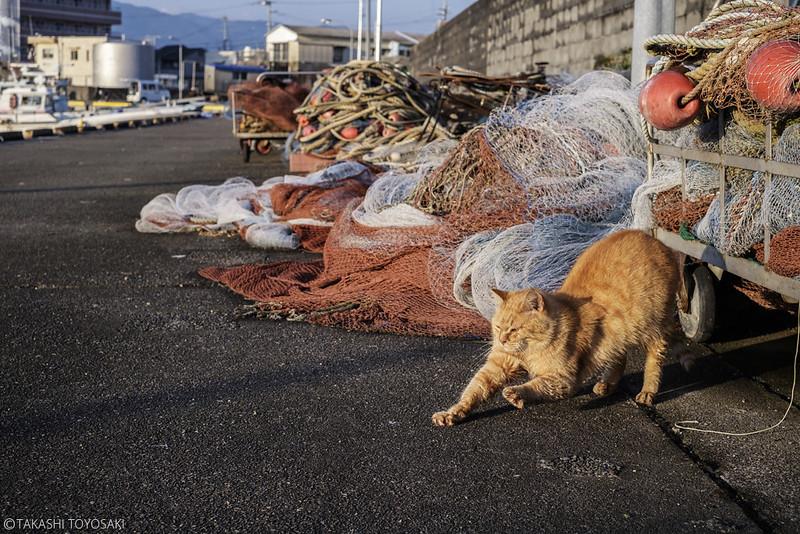 Tokushima Cat Color #240