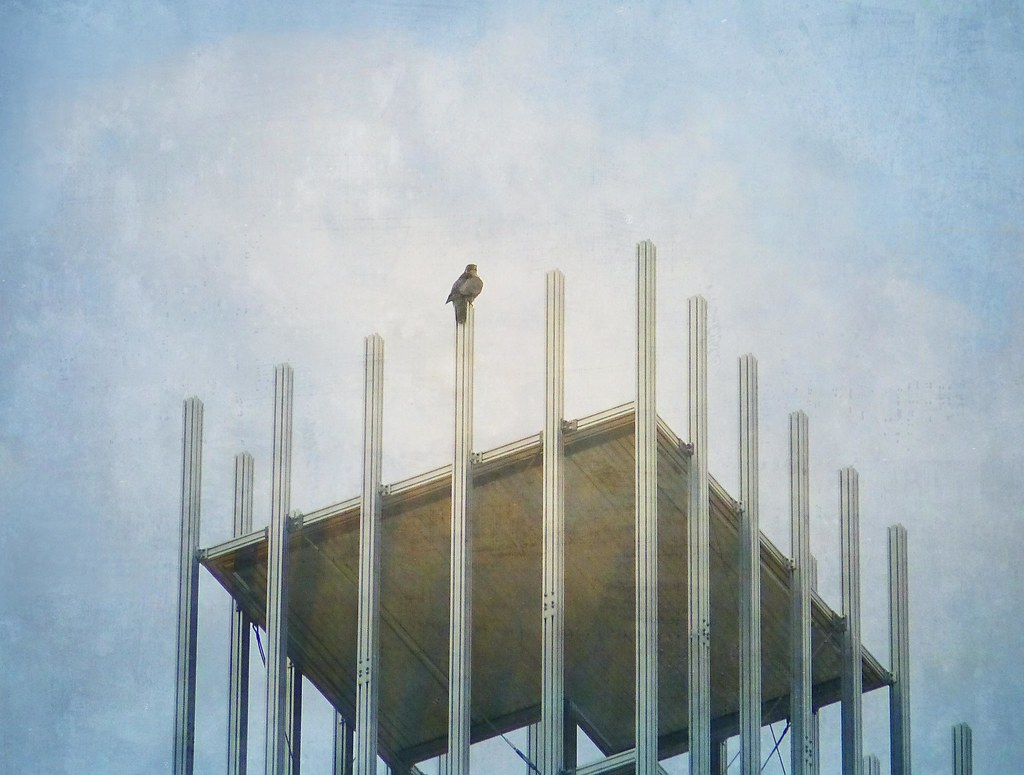 Peregrine falcon atop the New Museum