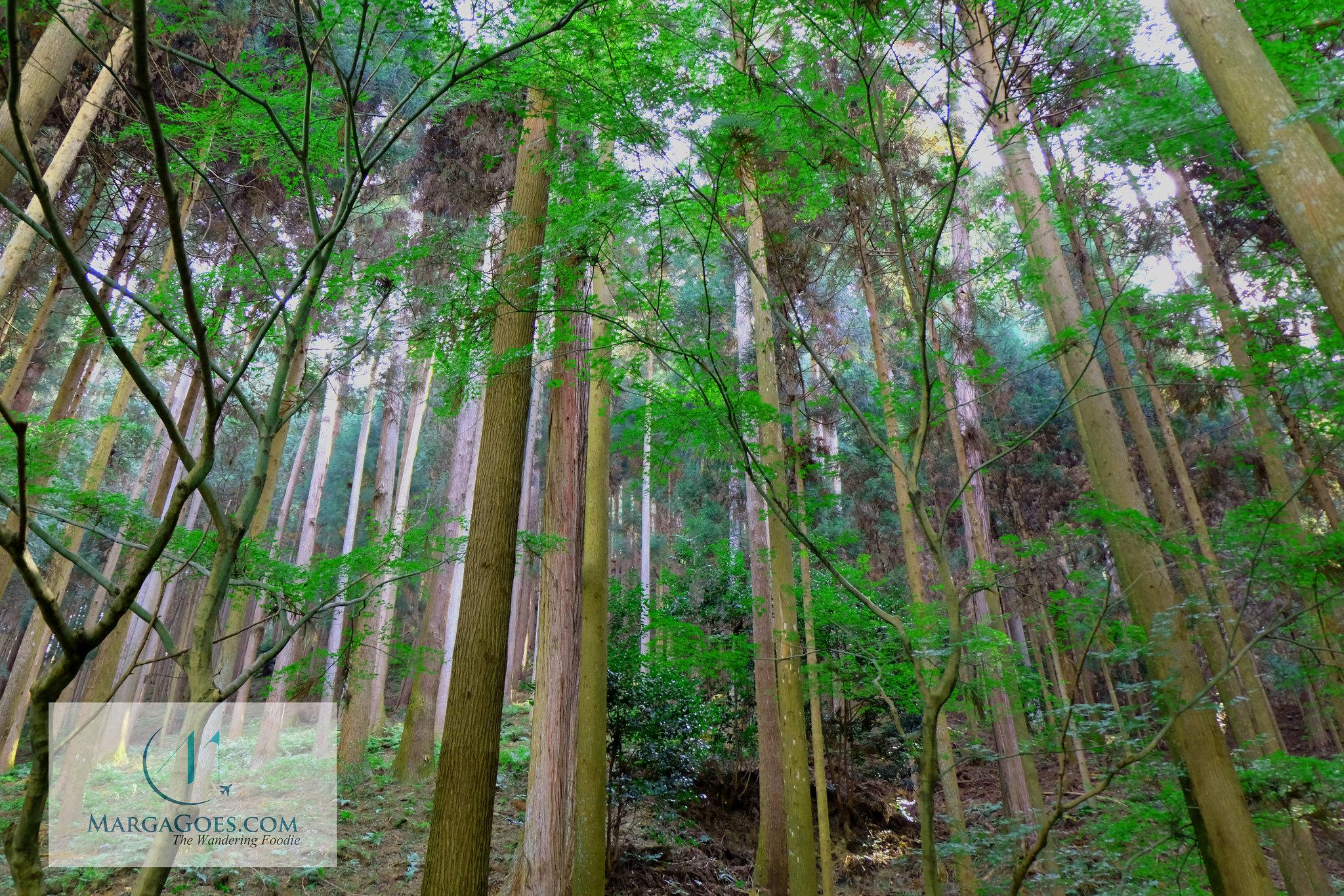 Bamboo in ginkakuji