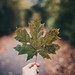 Mandatory Autumn Photo by desomnis