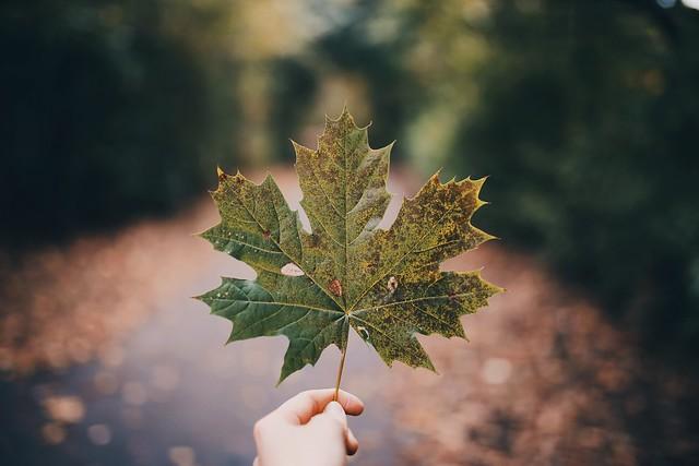 Mandatory Autumn Photo