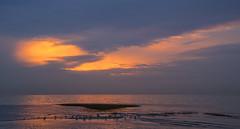 Sunset Birds _MG_2943