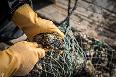 Man shucking oyster