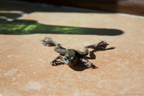 dead-frog-001