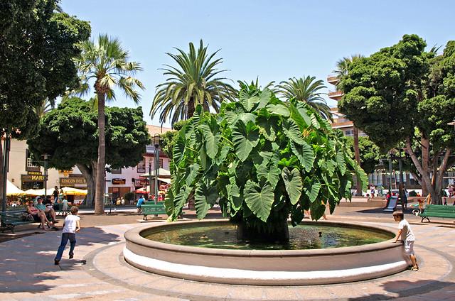 Plaza del Charco, Puerto de la Cruz, Tenerife