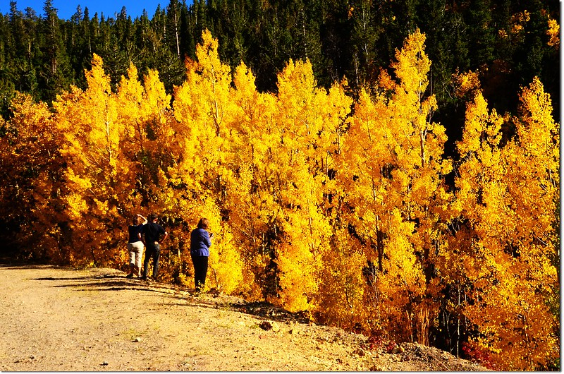 Fall colors by Peak to Peak HWY, Colorado  (11)