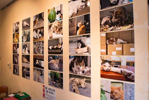 ROCKETIIDAPhoto exhibition  『Nekono-Akichi 8 ware』