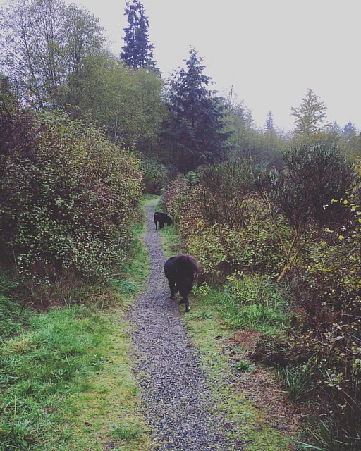 Misty and gloomy today, but we still have to do our daily dog walk.