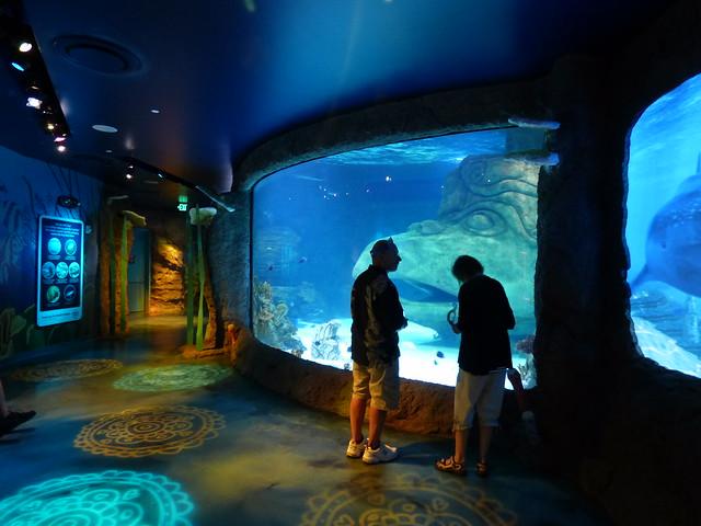 The Sea Life Aquarium, Orlando FL - The Electronic Nomad