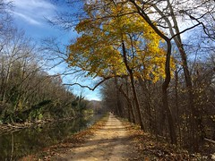 Last bits of fall on the C&O Canal