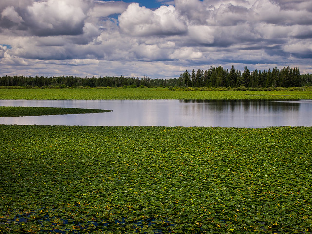 Lake of Lilies