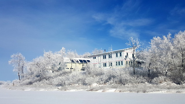 Winter Ponderosa