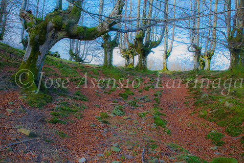 Parque Natural de Gorbeia #DePaseoConLarri #Flickr -2847