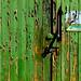 Green door by Finepixtrix