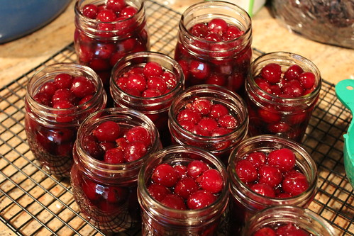 maraschino cherries :: coppertopkitchen.blogspot.com