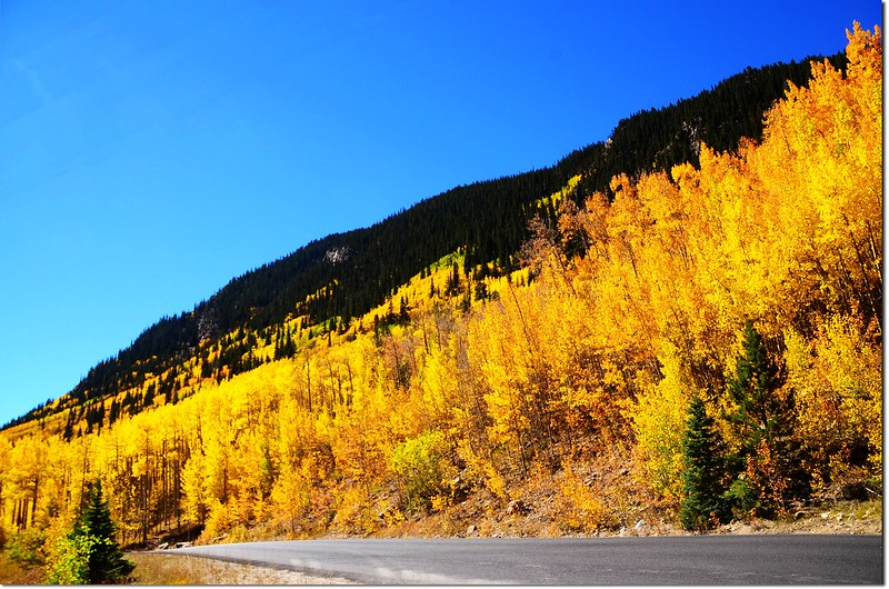Fall colors at Guanella Pass, Colorado (5)