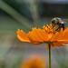 bee by Tanya Mattek, Norman OK (trenchphotos)