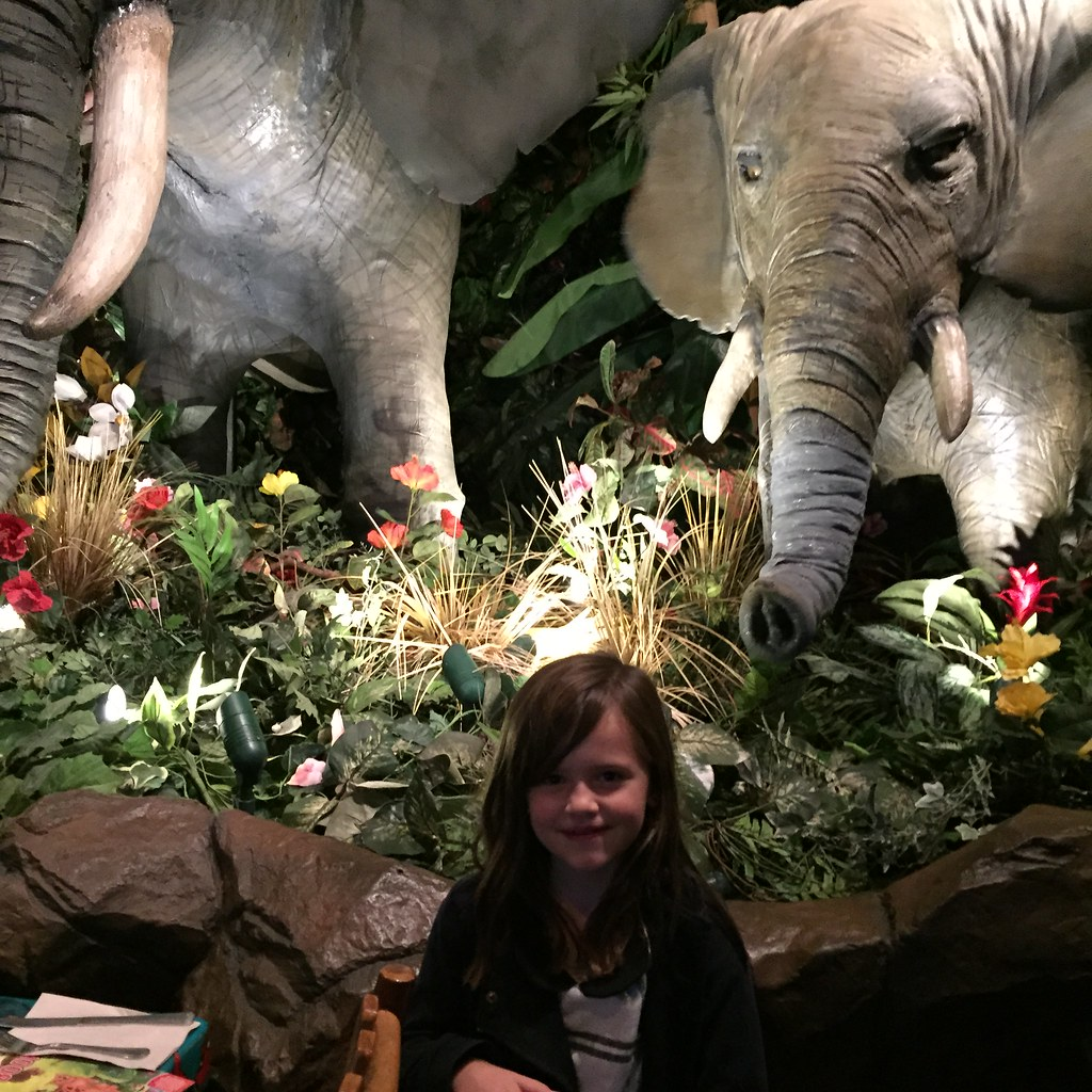 rainforest cafe for cate's 7th birthday