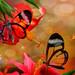Glasswings by Reg Ramai ( catching up)