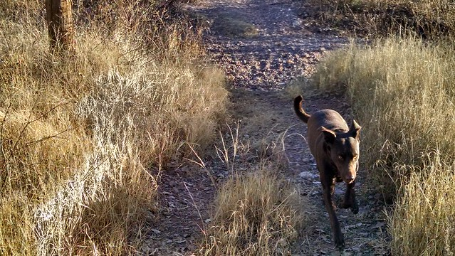 Coco On the Trail