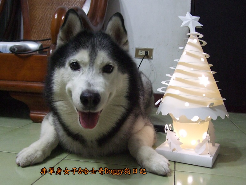Doggy與紙箱王聖誕樹造型燈飾組01