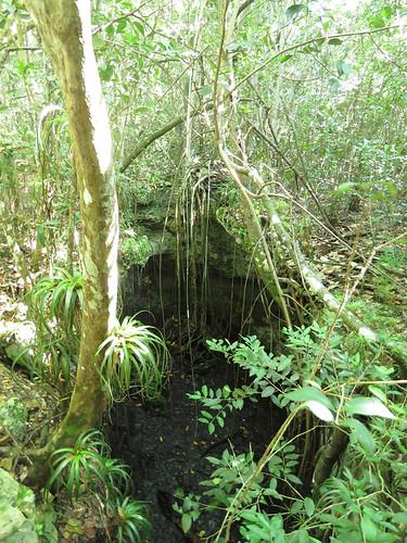 Primeval Forest #2
