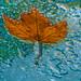 Nature on Glass. by Omygodtom