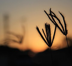 Clique de fim de tarde na #vilaroca #cabodesantoagostinho. QUE FRASE/pensamento/poema poderia compor na imagem? #suacriatividade