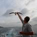 Feeding the seabird in air by daveynin
