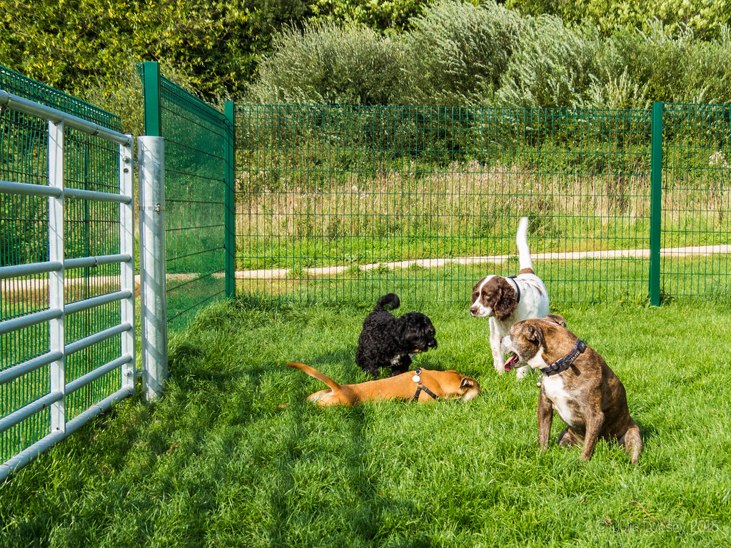 Meet and Greet in the dog training area
