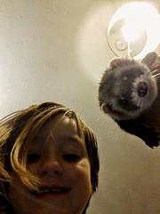 nose, animal, weasel, skin, pet, mustelidae, mammal, head, ferret,