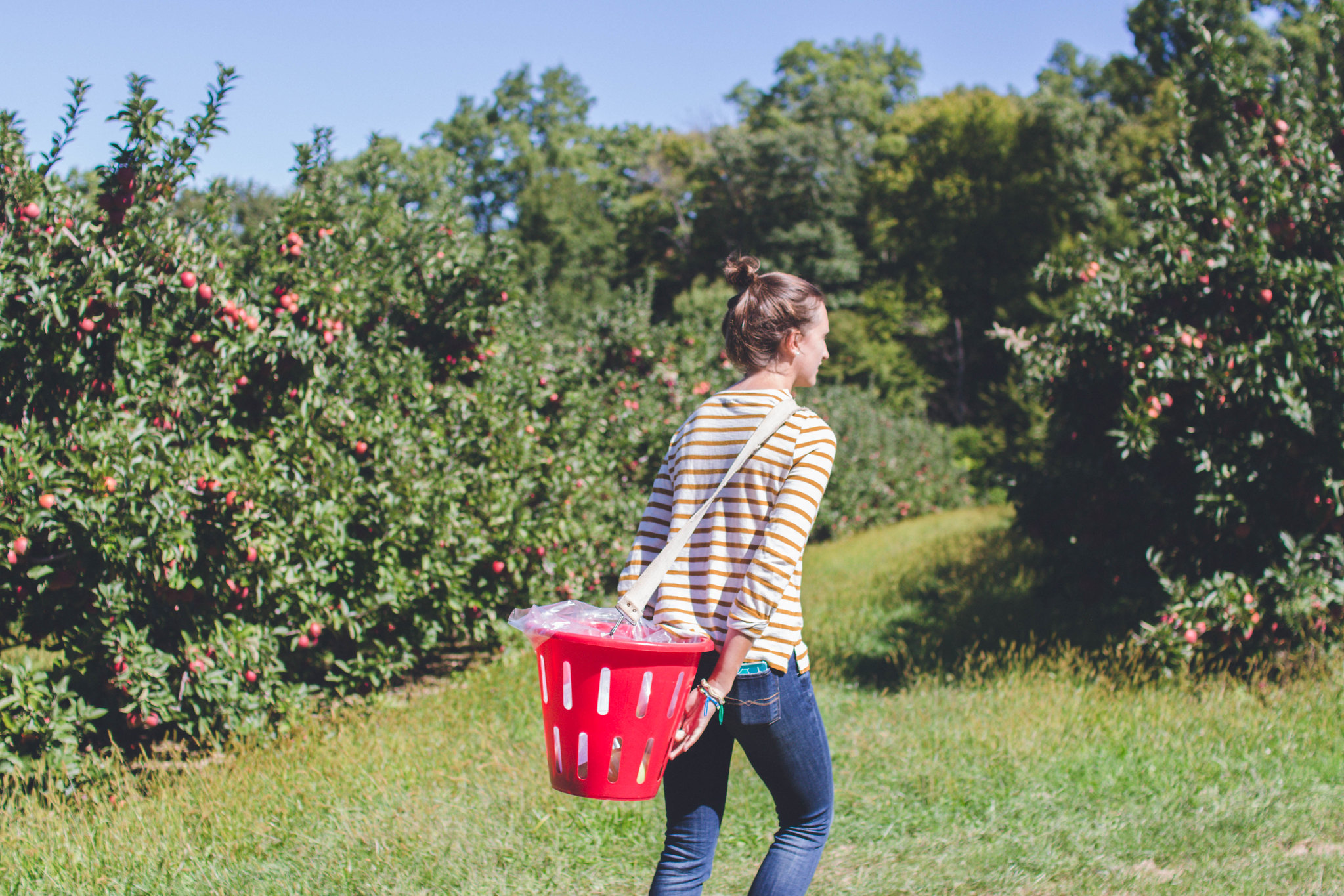 applepicking-42
