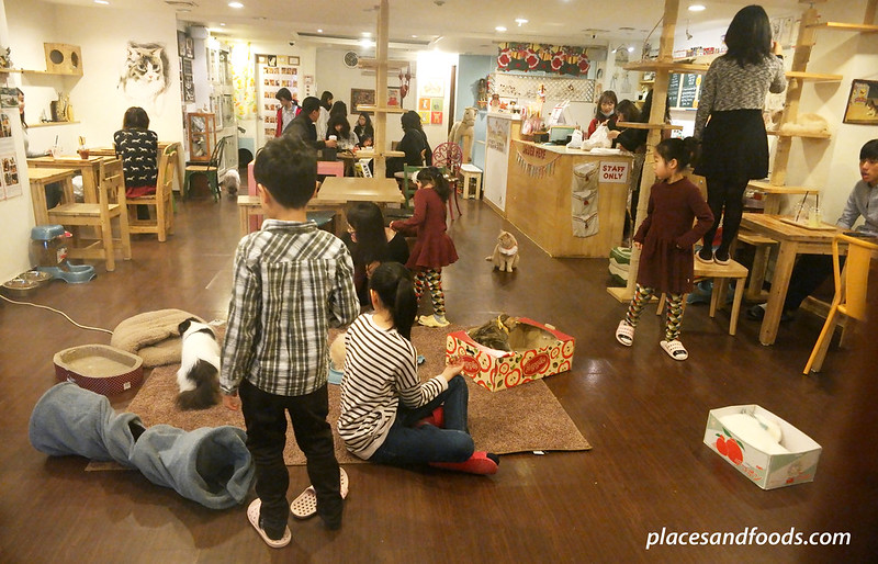 cat cafe playground seoul interior