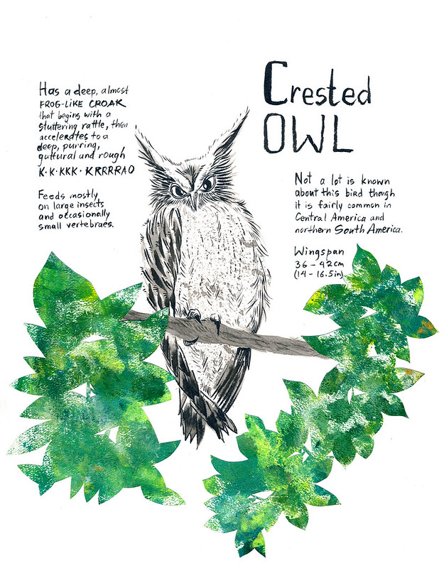 Owls_21_Crested_Owl