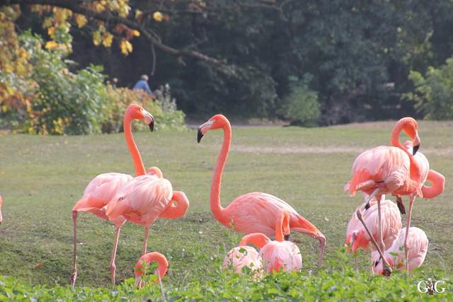 Sonntags-Besuch im Tierpark Friedrichsfelde 04.10.201575