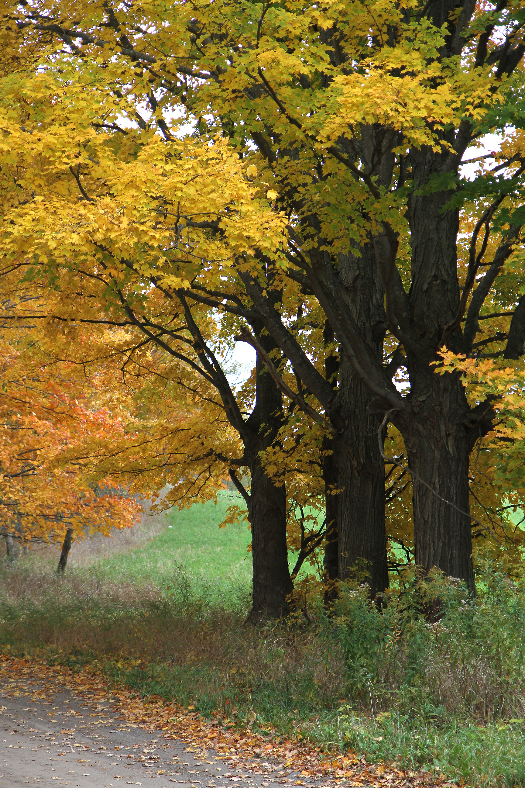 Autumn drive57