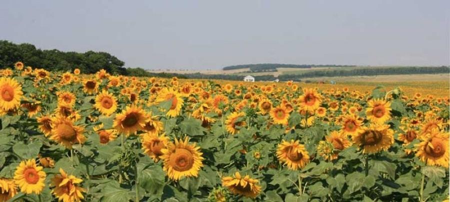 Развитие сельского туризма в крае