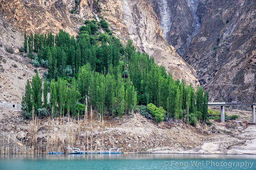 travel pakistan lake tree horizontal outdoors asia poplar growth pk hunza colorimage gilgitbaltistan hunzanagar gojallake attabadlake gojalvalley hunzaregion